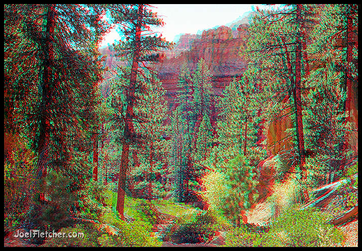 Magical pine forest at Bryce. gallery