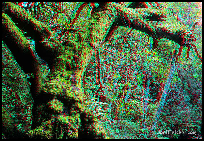 Mossy tree with face in 3D. gallery