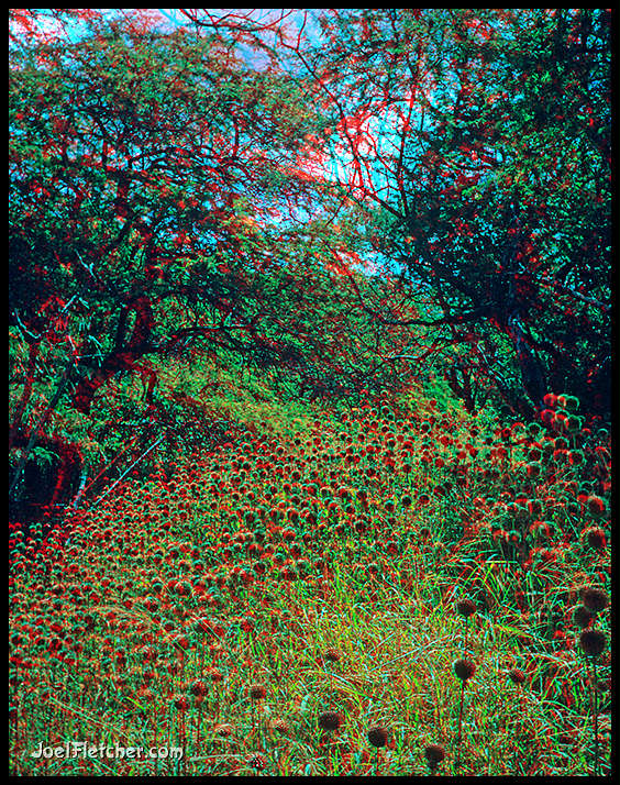 3D field of pod flowers in Hawaii. gallery