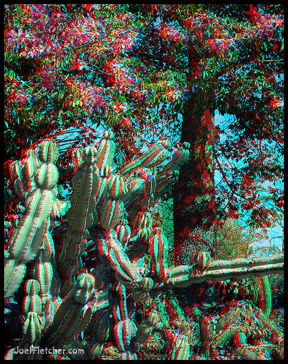 Stereo photo of cactus at Huntington gardens. gallery
