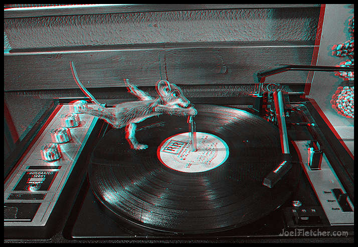 Mouse exercising on a turntable. gallery
