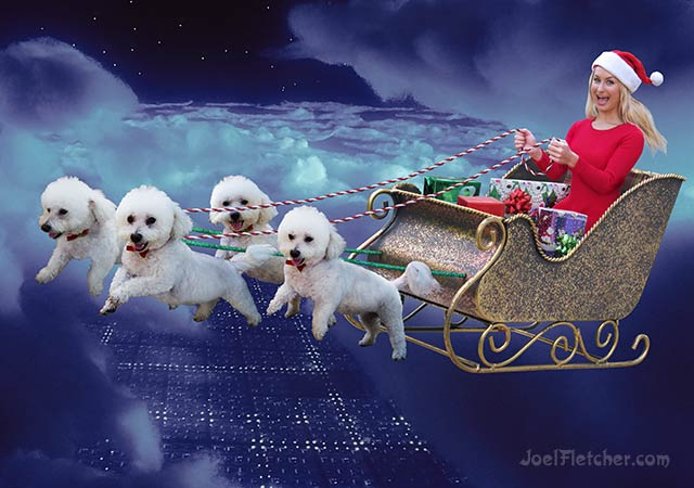 Pretty girl rides a sleigh pulled by flying bichon frise dogs. edge