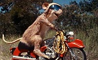 mouse riding motorcycle