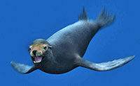 An animated sea lion
