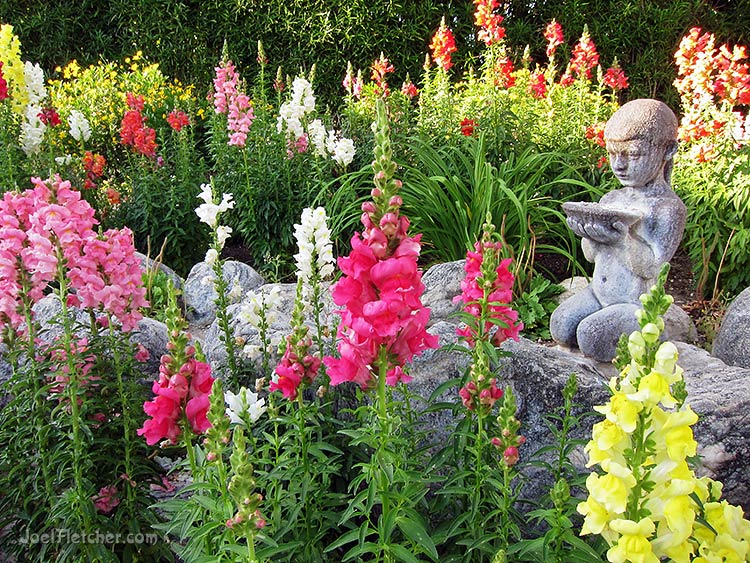 Snapdragon flowers with statue. gallery