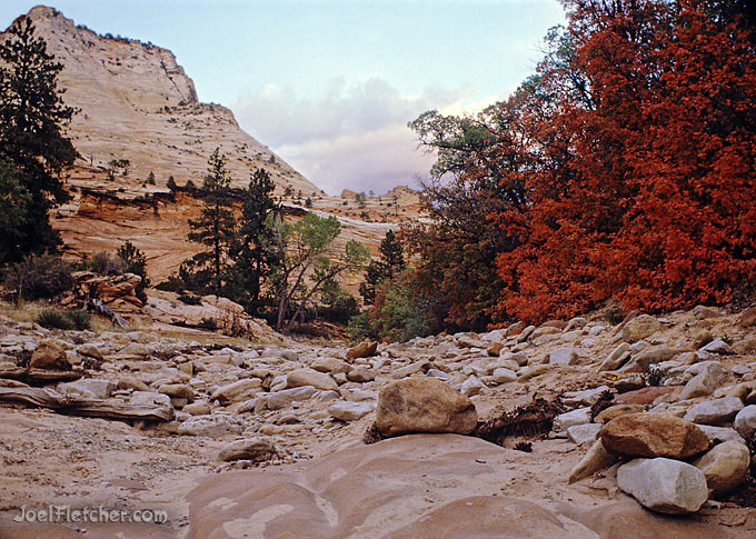 Rocky stream bed with colorful tree and mountain in the background.